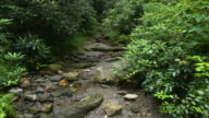 Slow tilt up over dry stream bed in forest area