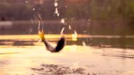 Slow-Mo: Jumping fish