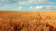 Slow-motion: Crane Shot Of Wheat Field And Sky