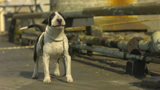 Slow-Motion Dog Barking