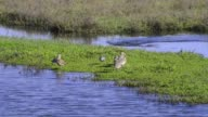 Small birds standing and swimming