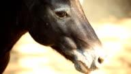 small black horse.