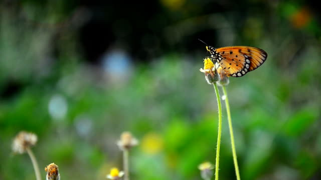 small butterfly fly