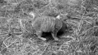 Kleine Katzen spielen