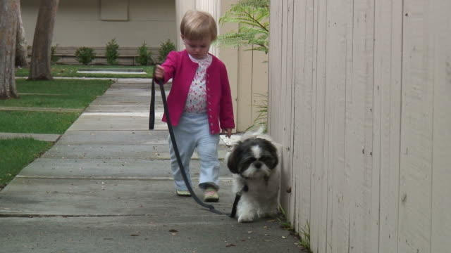 (HD1080i) Small Child Walking Dog Towards Camera, Zoom Out