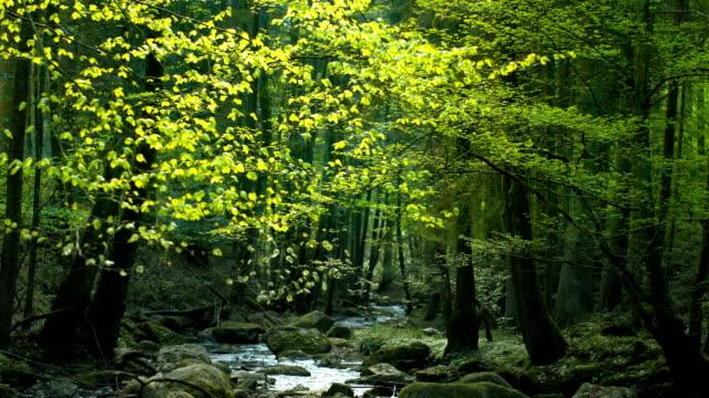 Piccolo torrente che scorre attraverso la foresta di sole (4 k Ultra HD/HD)