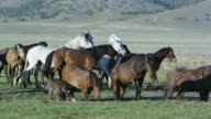 Small group of wild horses moving together across the vast landscape