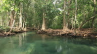 small lake in swamp forest 1080p