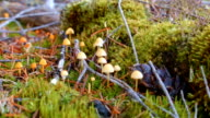 Small orange mushrooms and moss macro McKenzie River Valley Oregon 5