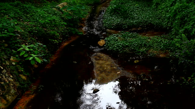 small stream in forest, Thailand