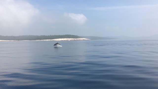 Smartphone-Video von einem Delfin springen aus dem Wasser