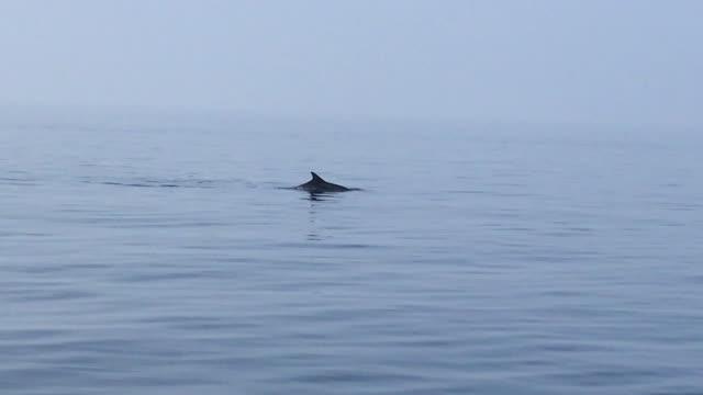Smartphone-Video von Delfinen schwimmen im Wasser