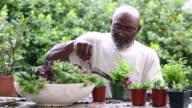 Smiling African American man potting plants in garden