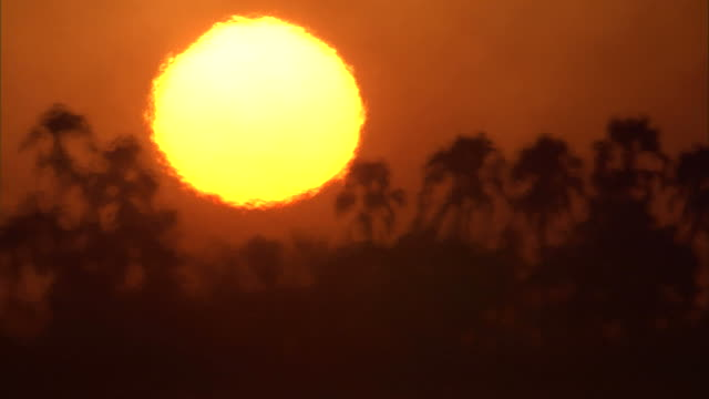 Smoke and heat waves ripple across the Okavango Delta as a blazing sun sets beyond palm trees. Available in HD.