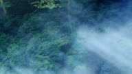 smoke in forest.