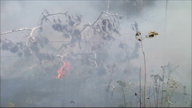 Smoke rises from a fire in the Amazon rainforest. Amazon-jungle