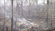 Smoke rises from fallen trees in a burnt out rainforest. Amazon-jungle