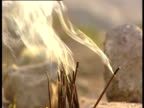 Smoke rises from incense sticks