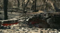 CU Smoke rises from smoldering trees / Eyre Peninsula, South Australia, Australia