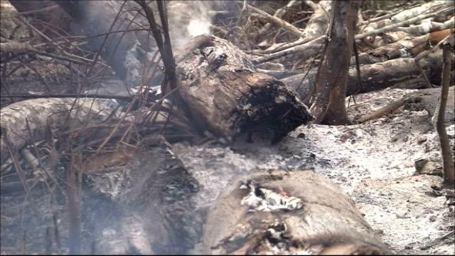 Smoke rises from stumps of rainforest trees in Brazil. Amazon-jungle