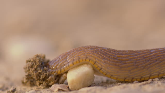 Snail crawling over a small stone