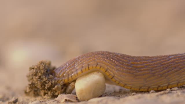 Lumaca crawling su un piccolo stone