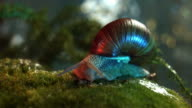 snail in the forest