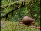 Snail moves over moss
