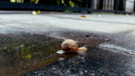 snail moving in the water acecelerated footage
