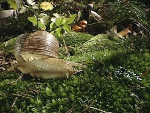 Snail on forest ground