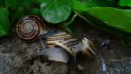 Snail on the snail