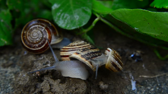 Snail on the snail