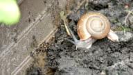 Snail on the soil
