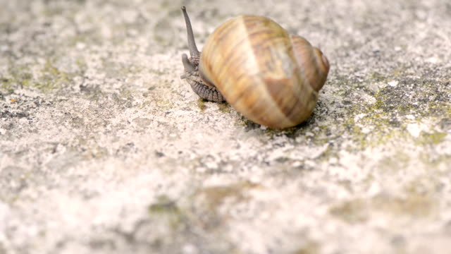 Snail slowly crawling