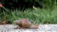 Snail slowly