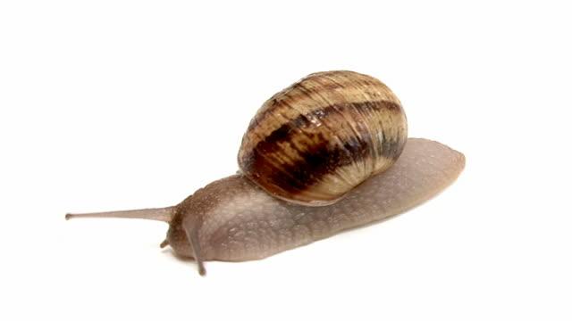 Snail - TimeLapse