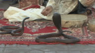 WS ZI ZO CU Snake charmer in Djemaa el Fna square, Marrakech, Morocco