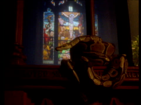 Snake coiled on pew in church, stained glass window behind