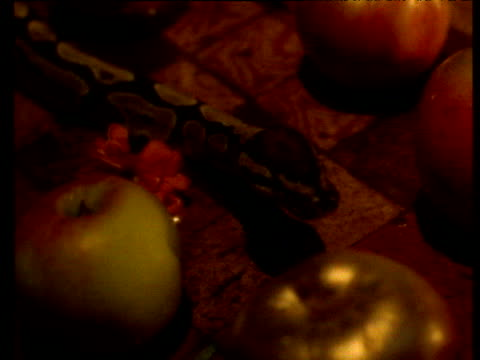 Snake slithers around red and gold apples.