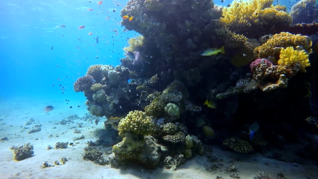 Snorkeling Coral reef with lot of fisch on Red Sea