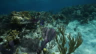 Snorkeling in reef, fish swimming through coral