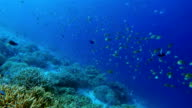 Snorkeling ride along coral reef with tropical fishes on Maldives