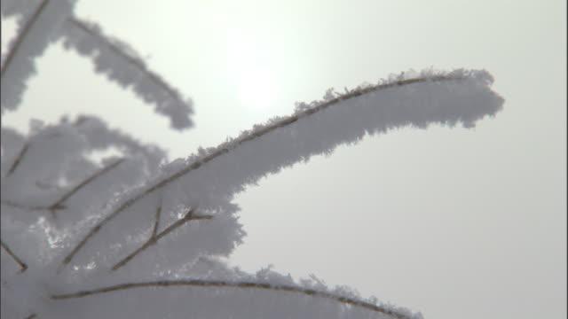 Snow covered bushes, Jiakuerte, China