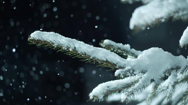SLO MO Snow covered spruce tree in snowfall at night