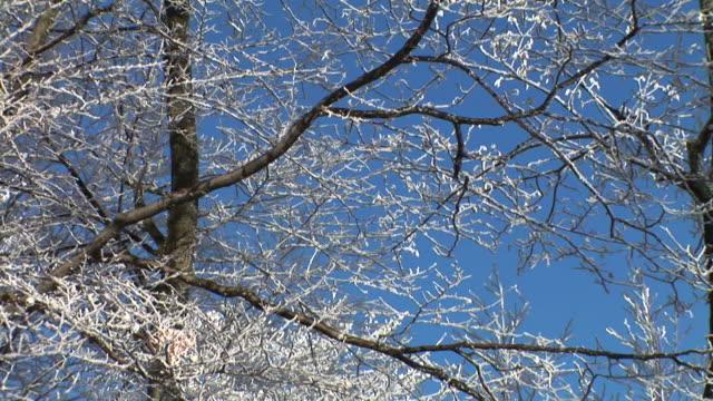 HD: Schneebedeckte Weihnachtsbaum.