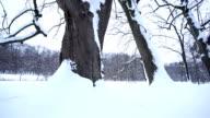Schneebedeckte Bäume, HD DOLLY