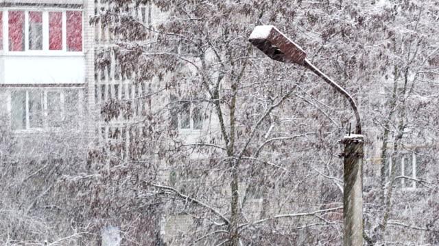 Ciclone neve sulla città. Lamppost e gli alberi coperti di neve.