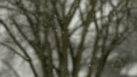 Snow falling against backdrop of trees, slow motion