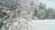 HD SLOW MOTION: Snow Falling Off Trees