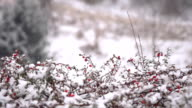 HD SUPER SLOW MO: Snow Falling On Briar-Rose